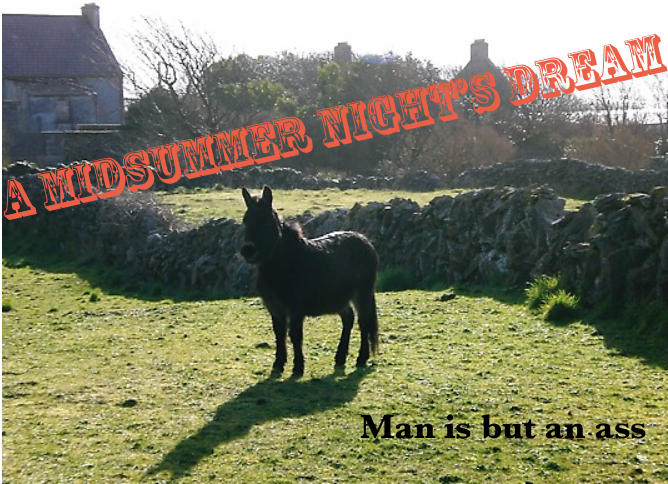 "A donkey in a field with the title above and quote ""man is but an ass"" below"